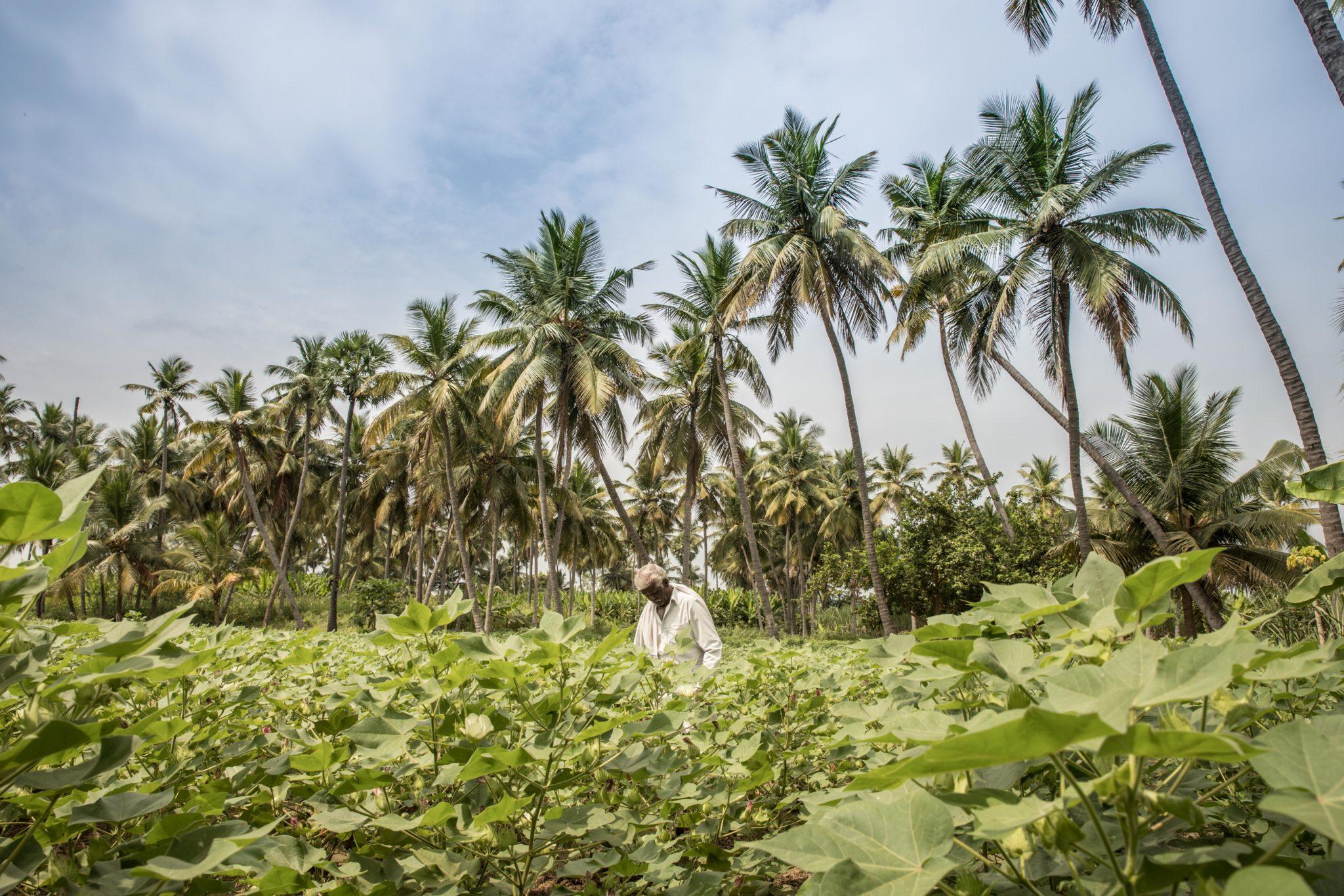Lieblingsstueck organic cotton Baumwolle Nachhaltigkeit fair trade